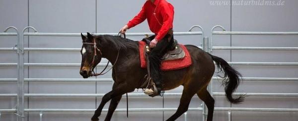 HWL Gleisberg auf der Messe Partner Pferd 2019